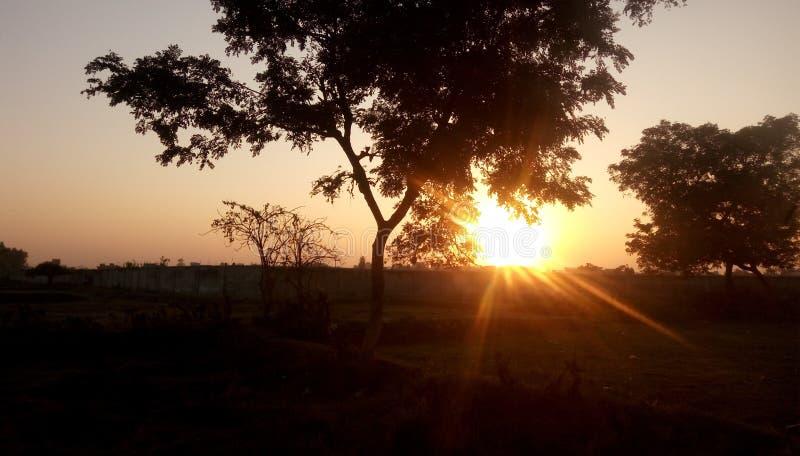 Árvore do por do sol fotos de stock