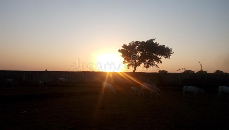 Árvore do por do sol foto de stock royalty free
