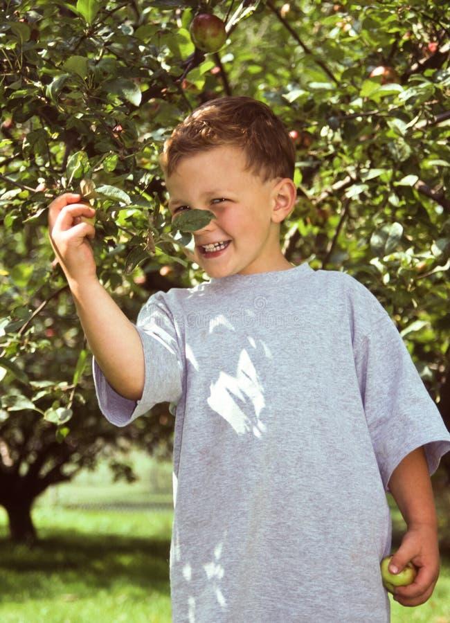 Árvore do rapaz pequeno e de maçã foto de stock