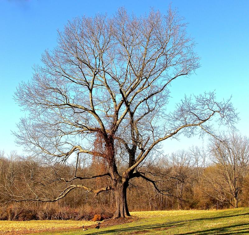 Árvore do sul majestosa imagens de stock royalty free