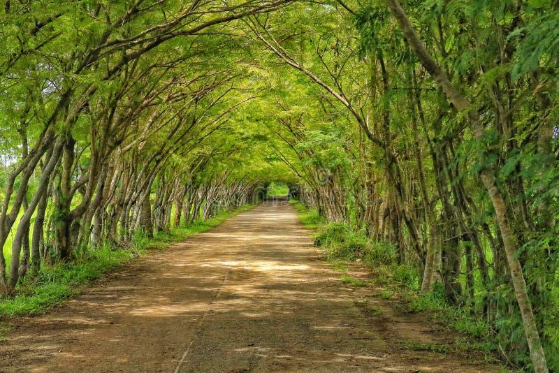 Árvore do túnel imagens de stock