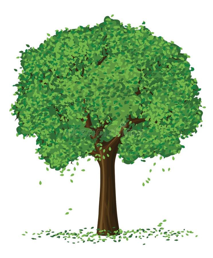 Árvore do verão da silhueta do vetor ilustração royalty free