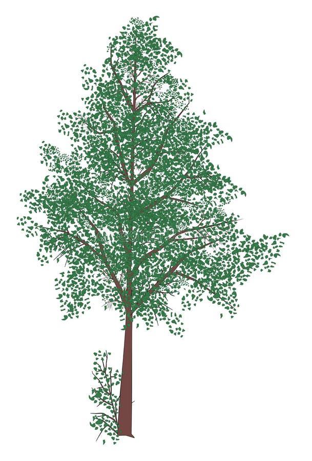 Árvore do vetor com folhas fotografia de stock