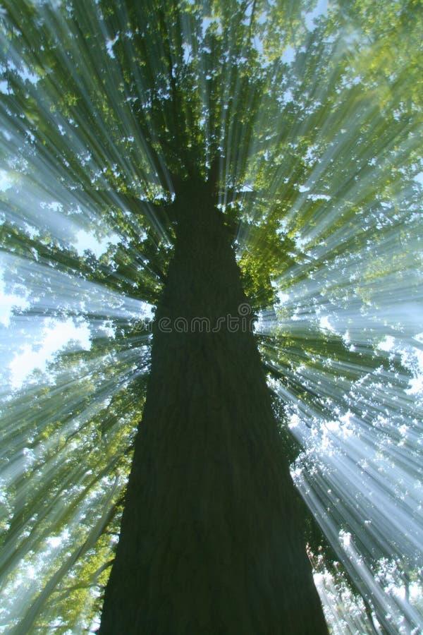 Árvore do zoom do ruído elétrico fotografia de stock