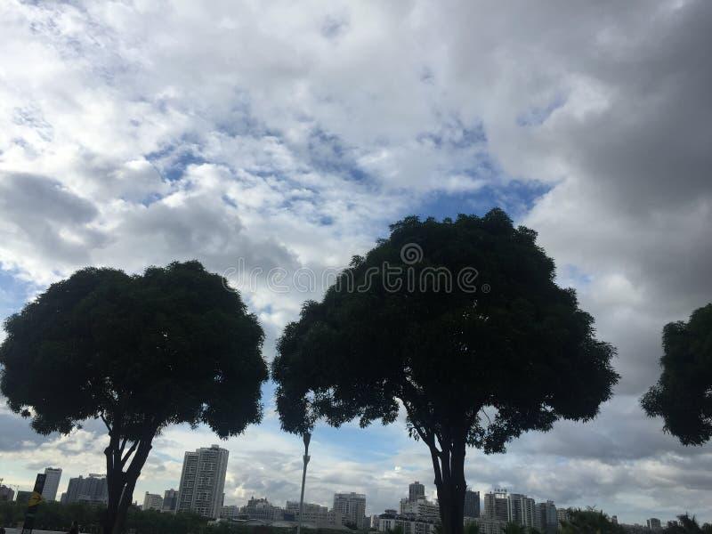 Árvore dos amantes fotografia de stock royalty free