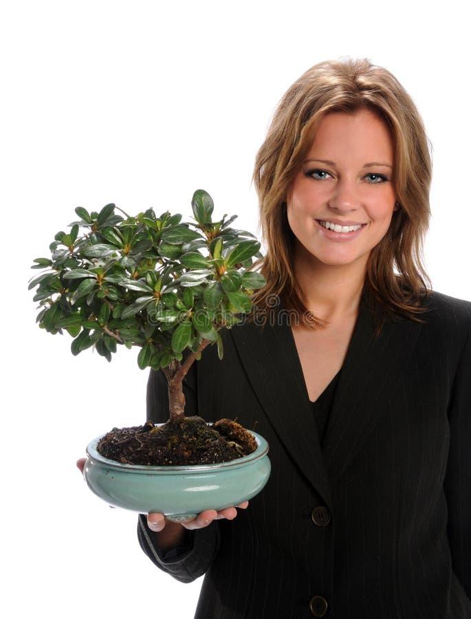 Árvore dos bonsais da terra arrendada da mulher imagem de stock