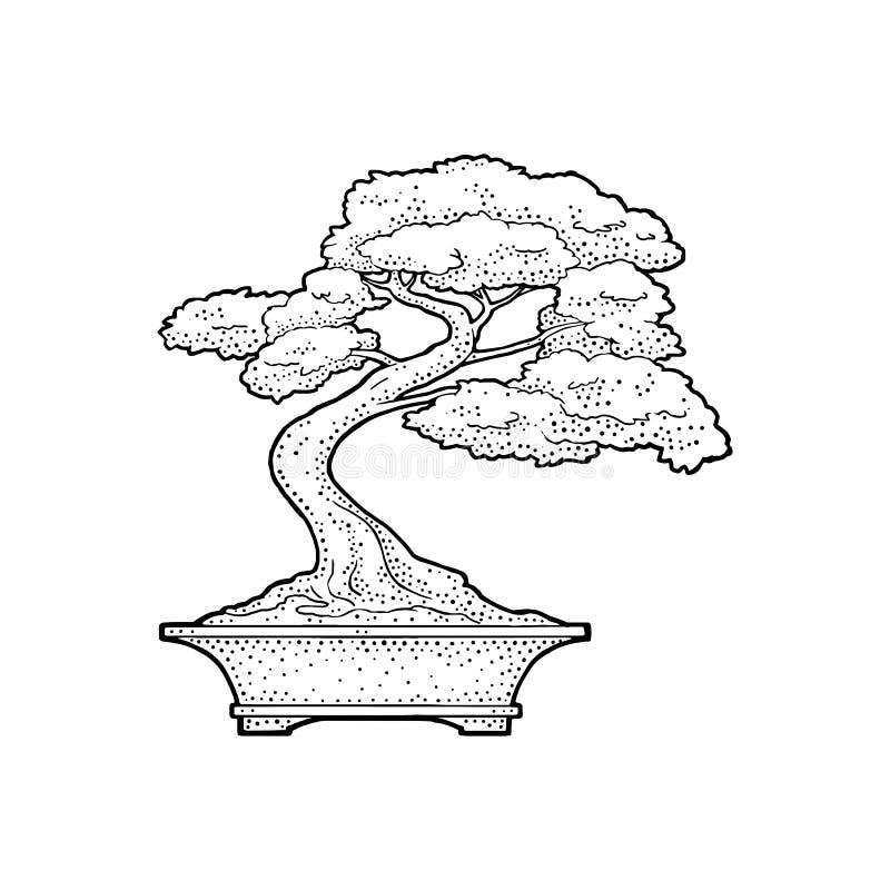 Árvore dos bonsais no potenciômetro Ilustração preta da gravura do vetor do vintage ilustração royalty free