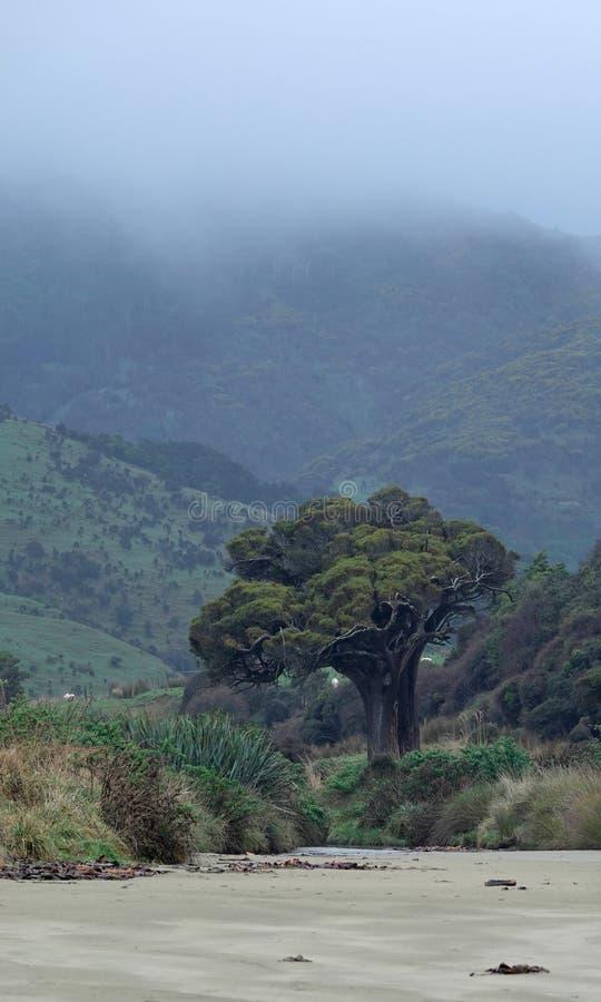 Árvore dos brócolis na praia no Catlins, Nova Zelândia da baía do canibal imagem de stock royalty free