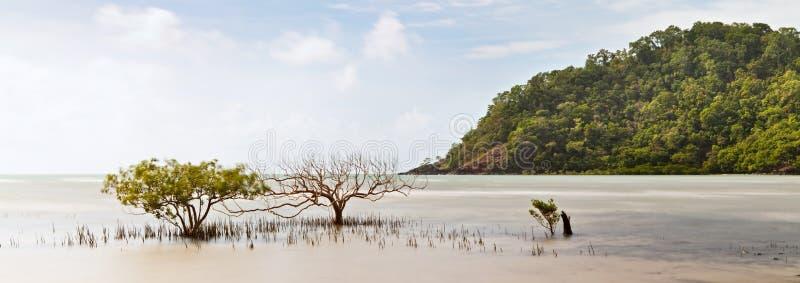 Árvore dos manguezais imagens de stock