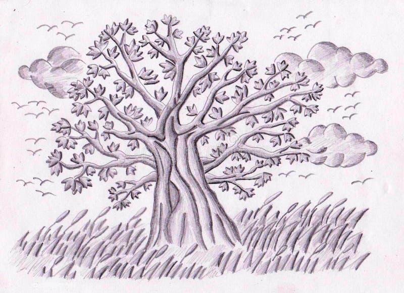 Árvore dos prados fotos de stock royalty free