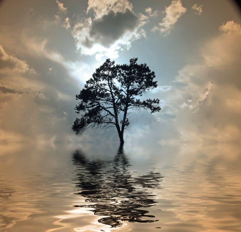 Árvore e água fotos de stock