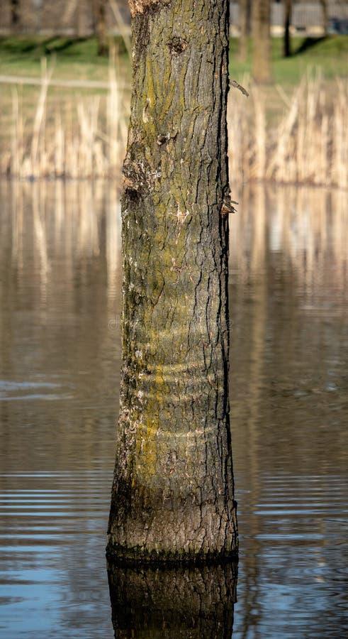 Árvore e água como o círculo da vida fotografia de stock