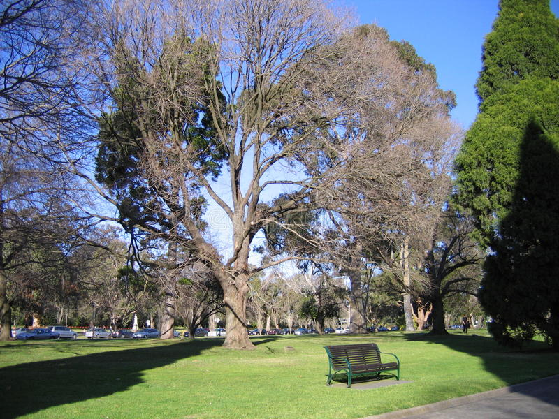 Árvore e banco grandes embaixo no parque, Melbourne imagens de stock