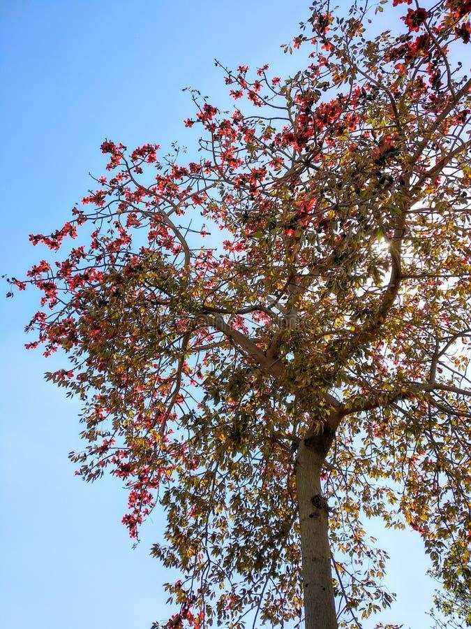 Árvore e céu fotografia de stock royalty free