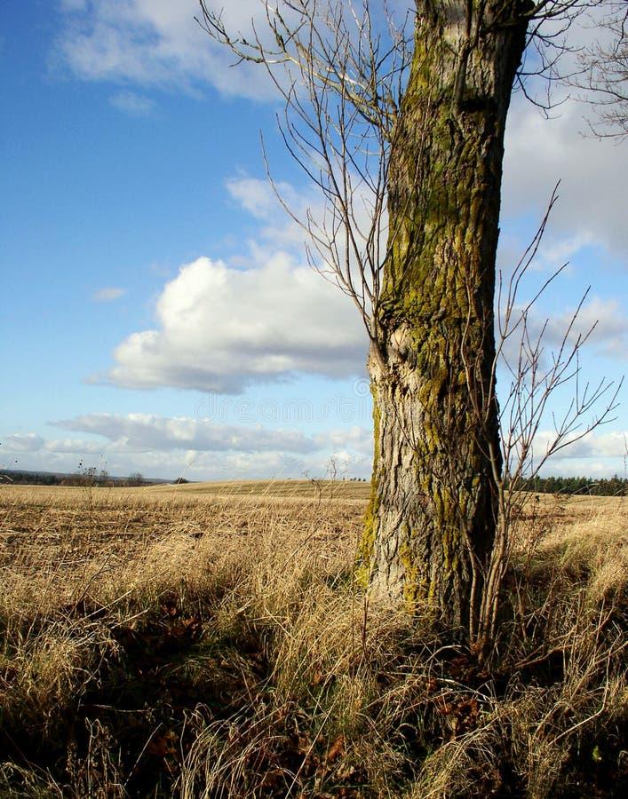 Download Árvore e céu imagem de stock. Imagem de tronco, árvore, desktop - 54749