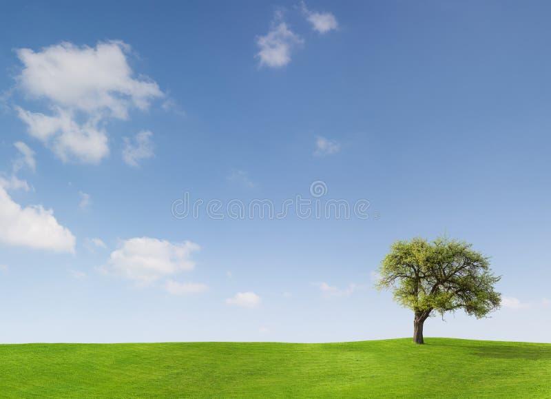 Árvore e céu azul fotografia de stock