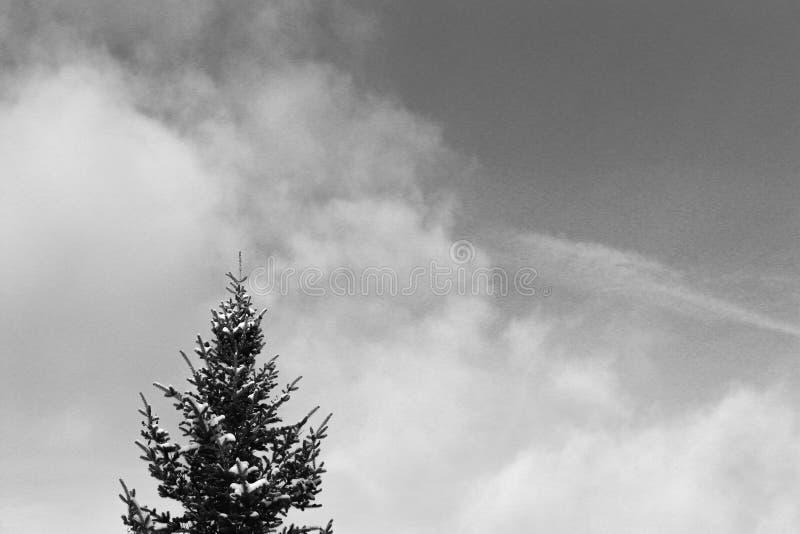 Árvore e céu de pinho imagem de stock royalty free