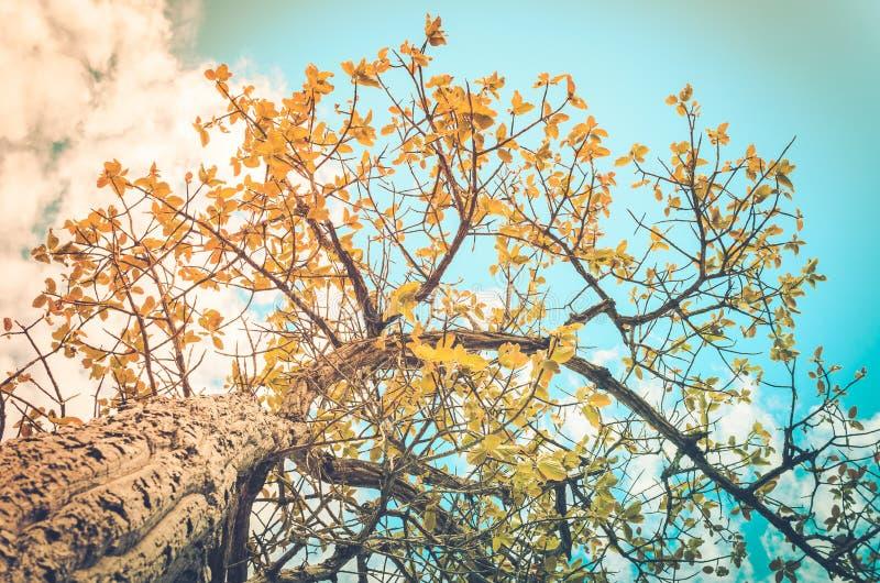 Árvore e céu no campo fotografia de stock royalty free