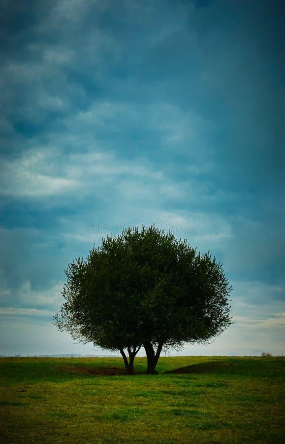 Árvore e céu solitários foto de stock