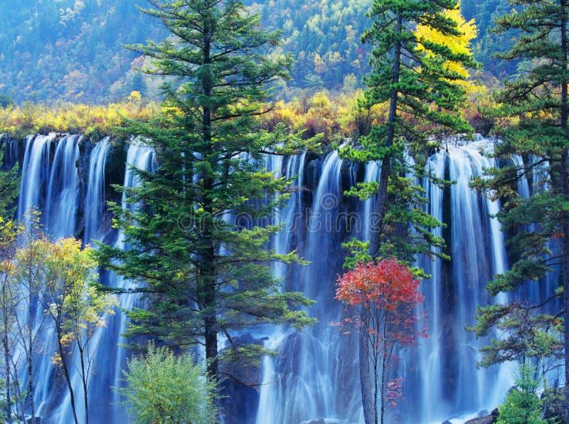 Árvore e cachoeira do outono no jiuzhaigou imagens de stock