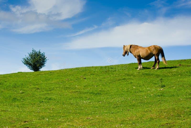Árvore e cavalo imagens de stock