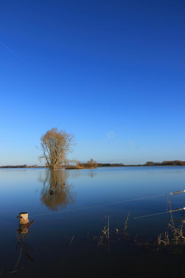 Árvore e cerca elétrica no ijssel inundado do rio fotografia de stock