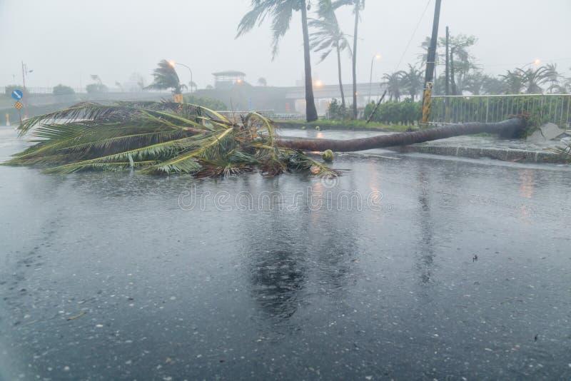 Árvore e debri na estrada durante o tufão foto de stock royalty free