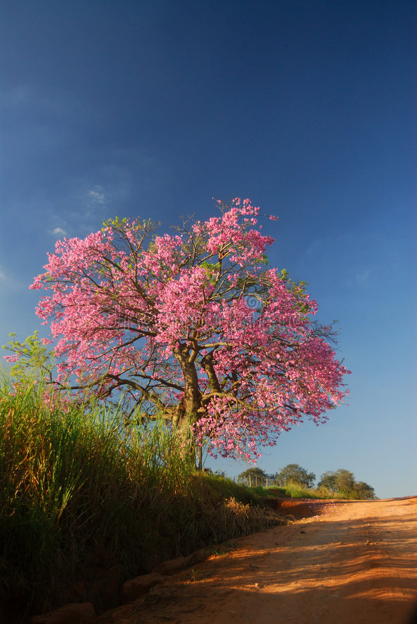 Árvore e flores fotos de stock royalty free