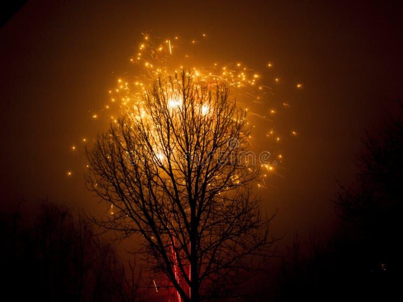 Árvore e fogo de artifício foto de stock