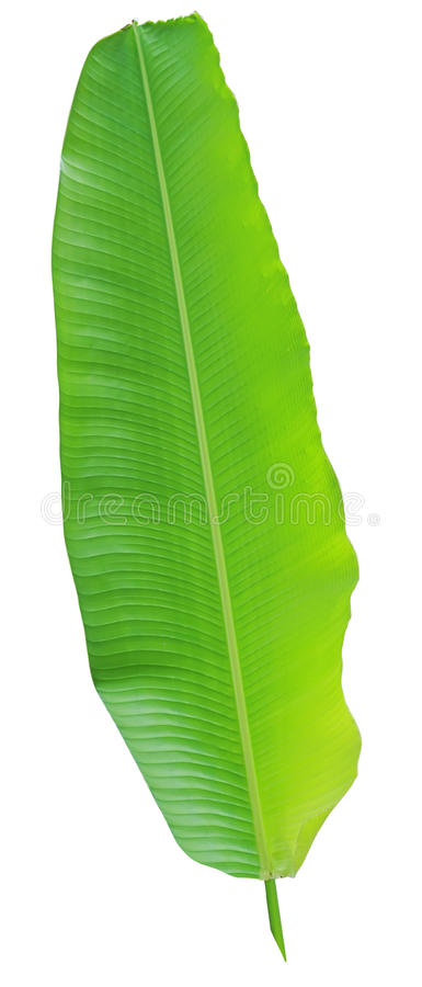 Árvore e folha de banana fotografia de stock