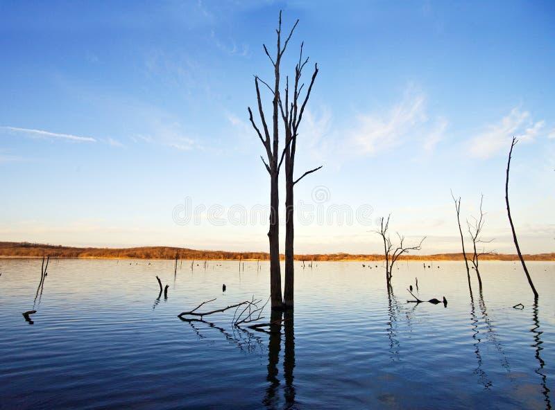 Árvore e lago imagens de stock