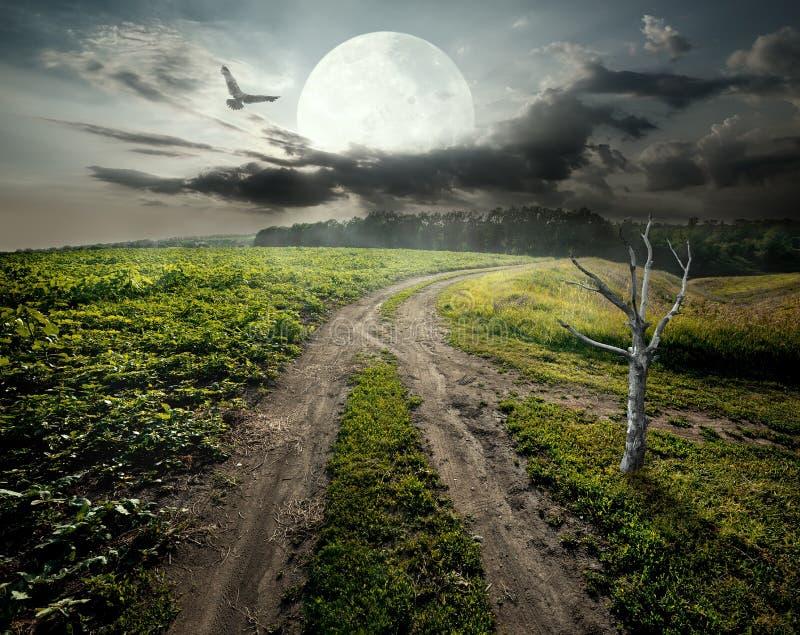 Árvore e lua secas imagens de stock