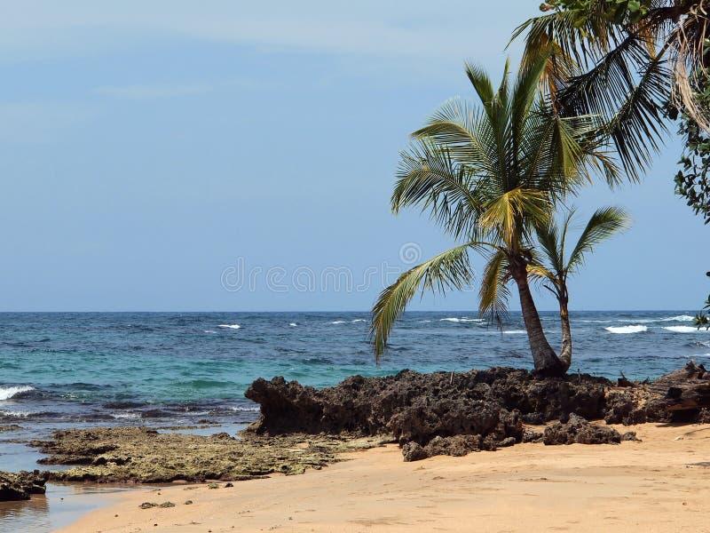 Árvore e mar de coco imagem de stock