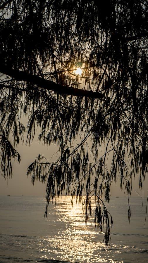 Árvore e mar no nascer do sol foto de stock royalty free
