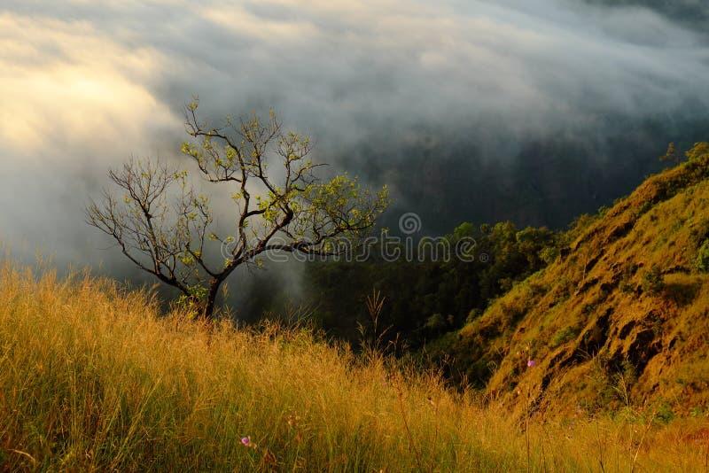 Árvore e montanha na nuvem imagem de stock