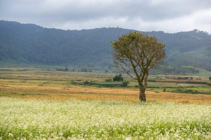 a árvore e a mostarda colocam com a flor branca em DonDuong - Dalat- Vietname foto de stock royalty free