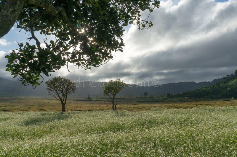 a árvore e a mostarda colocam com a flor branca em DonDuong - Dalat- Vietname imagens de stock royalty free