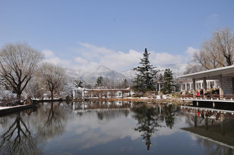 Árvore e neve imagens de stock royalty free