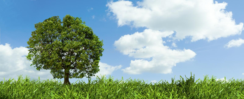 Árvore e o céu imagens de stock royalty free