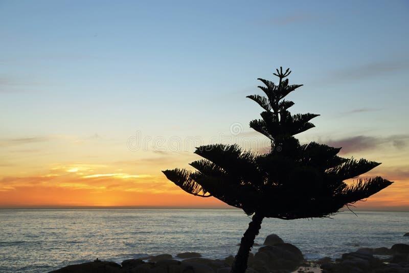 A árvore e o oceano no por do sol dos acampamentos latem fotografia de stock royalty free