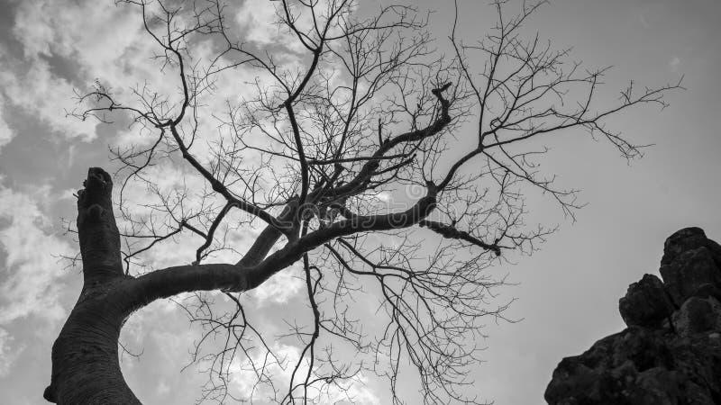 A árvore e os troncos velhos imagem de stock