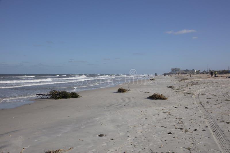 Árvore e outros restos na praia foto de stock