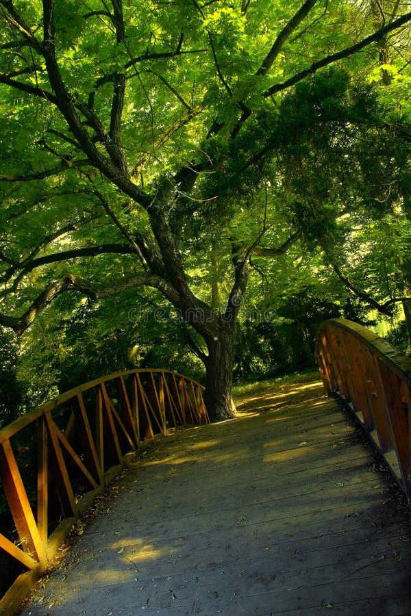 Download Árvore e ponte imagem de stock. Imagem de outing, parque - 543141