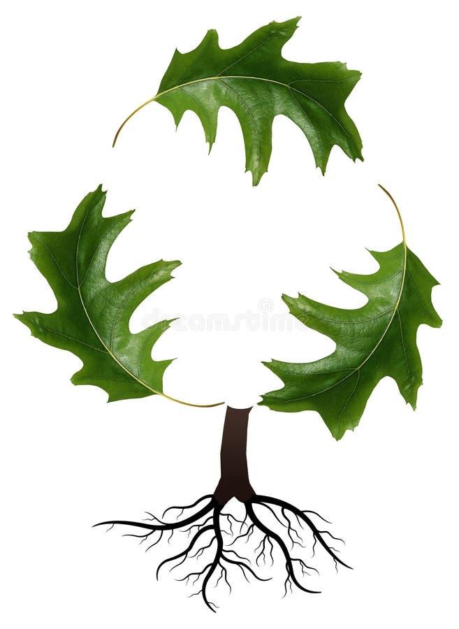 A árvore e recicl ilustração do vetor