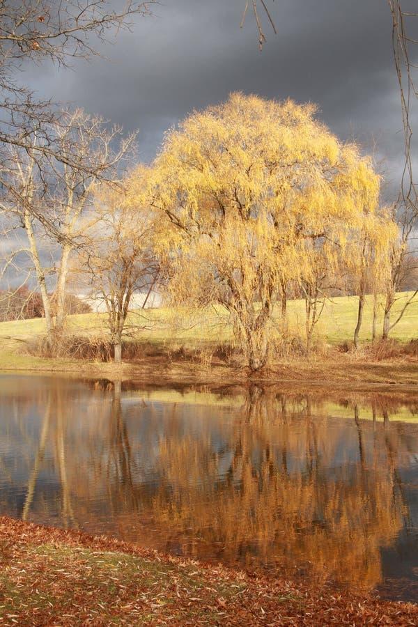 Árvore e reflexão fotografia de stock
