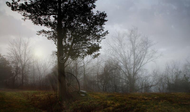 Árvore e roda sós fotografia de stock royalty free