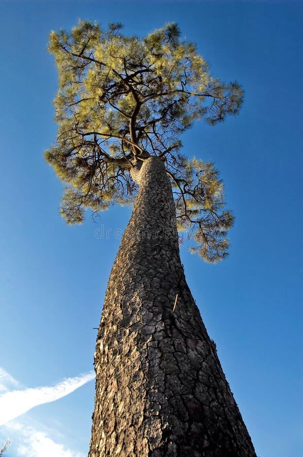 Árvore elevada fotografia de stock royalty free