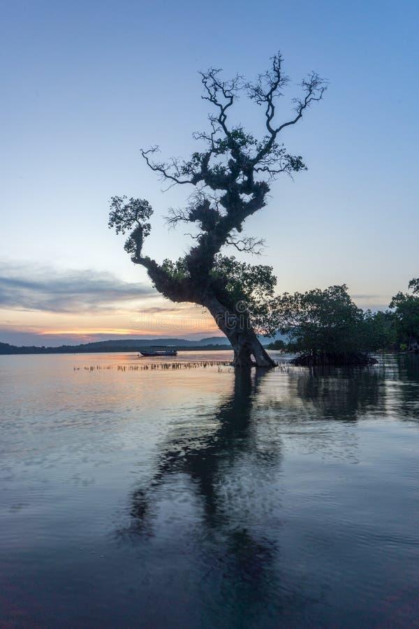Árvore em Bawean, Gresik, Indonésia fotos de stock