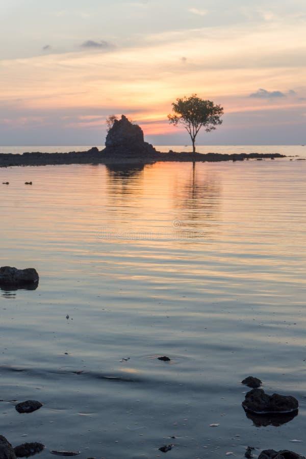 Árvore em Bawean, Gresik, Indonésia imagens de stock
