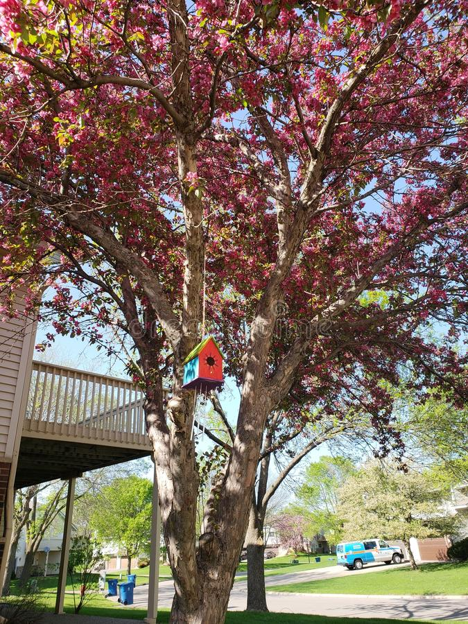 Árvore em Burnsville Minnesota imagens de stock